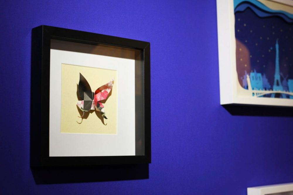 Focus papillon naturalisé 1